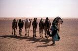 tagilmust;turban;nomadic;nomad;nomads;tuareg;tuaregs;dark;african;wanderer;hot;desert;deserts;people;person;robe;indigo;cloth;camel;camels;ships-of-the-desert;sand;desert;sahara;saharan;niger;algeria;deserts;hot;dry;dehydration;arid