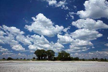 Adansonia;Adansonia-digitata;Africa;alkalii-flat;Baines-Baobabs;Baines-Baobabs;Baines-Baobabs;baobab;baobab-tree;baobab-trees;baobabs;barren;barreness;basin;Botswana;clay-pan;clay-pans;cloud;clouds;depression;desert;deserts;desolate;dry;dry-lake;dry-lake-bed;dry-lake-beds;dry-lakes;empty;endorheric;endorheric-basin;endorheric-basins;endorheric-lake;extreme;flat;geographic;geography;glare;glary;Kudiakam-Pan;lake;lake-bed;lake-beds;lakes;Makgadikgadi-Pan;Makgadikgadi-Pans;national-park;national-parks;Nxai-Pan-N.P.;Nxai-Pan-National-Park;Nxai-Pan-NP;pan;pans;playa;playas;remote;remoteness;rock-salt;sabkha;saline;salt;salt-crust;salt-lake;salt-lakes;salt-pan;salt-pans;salt-rock;salt-rocks;salt_pan;salt_pans;saltpan;saltpans;salty;skies;sky;Southern-Africa;tree;trees;vast;vlei;white;white-surface;wilderness