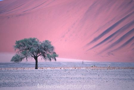 Namib_Naukluft-National-Park;National-Park;Namibia;namibian;Southern-Africa;Africa;african;plain;plains;landscape;sand;sand_dune;sand_dunes;sand-dune;sand-dunes;dune;dunes;sparse;empty;desert;deserts;deserted;africa;african;wilderness;sandy;sand;sands;vast;barren;desolate;desolation;solitude;solitary;dried;dry;outdoor;outdoors;outside;surface;surfaces;tree;single;solo;trees;red