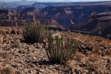 Africa;african;Ai_Ais-Richtersveld-Transfrontier-Park;Cactaceae;cacti;cactis;cactus;cactuses;canyon;canyons;chasm;chasms;cut;deep;desert;desert-plant;desert-plants;deserts;dry;erosion;fish-river;Fish-River-Canyon;fish-river-canyon-national-park;formation;formations;geological-feature;geological-features;gorge;gorges;Namib-Desert;Namibia;Namibian;ravine;ravines;river;rivers;Southern-Africa;Southern-Namiba;Sulphur-Springs-Viewpoint;valley;valleys;void;voids