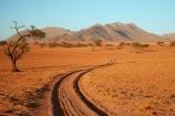 4wd-track;4wd-tracks;4x4-track;4x4-tracks;acacia;acacia-tree;acacia-trees;Africa;African;desert;deserts;Namib-Desert;Namib-Rand;Namib-Rand-Nature-Reserve;Namibia;NamibRand;NamibRand-Family-Hideout;NamibRand-Nature-Reserve;NamibRand-Reserve;NRNR;safari;safaris;sand;sandy;sandy-track;sandy-tracks;self-drive-route;self-drive-track;Southern-Africa;Southern-Namibia;track;tracks;tree;trees