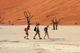 900-year-old-trees;adventure;adventurous;Africa;arid;big-dunes;children;clay-pan;clay-pans;dead-tree;dead-trees;Dead-Vlei;Deadvlei;desert;deserts;dry;dry-lake;dry-lake-bed;dry-lake-beds;dry-lakes;dune;dunes;families;family;family-holiday;family-holidays;giant-dune;giant-dunes;giant-sand-dune;giant-sand-dunes;holiday;holidays;hot;huge-dunes;lake-bed;large-dunes;Namib-Desert;Namib-Naukluft-N.P.;Namib-Naukluft-National-Park;Namib-Naukluft-NP;Namib_Naukluft-N.P.;Namib_Naukluft-National-Park;Namib_Naukluft-NP;Namibia;national-park;national-parks;natural;orange-sand;pan;people;person;remote;remoteness;reserve;reserves;salt-pan;salt-pans;sand;sand-dune;sand-dunes;sand-hill;sand-hills;sand_dune;sand_dunes;sand_hill;sand_hills;sanddune;sanddunes;sandhill;sandhills;sandy;Sossusvlei;Southern-Africa;tourism;tourist;tourists;tree-trunk;tree-trunks;vlei;white-clay-pan;wilderness