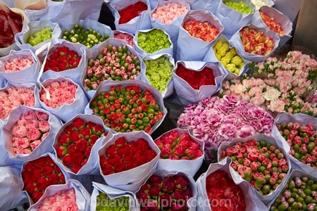 Asia;bloom;blooms;China;commerce;commercial;cut-flowers;floral;flower;flower-market;flower-markets;flower-shop;flower-shops;flower-stall;flower-stalls;flowers;H.K.;HK;Hong-Kong;Hong-Kong-Flower-market;Hong-Kong-Special-Administrative-Region-of-the-Peoples-Republic;Kowloon;Kowloon-Peninsula;market;market-place;market-stall;market-stalls;market_place;marketplace;marketplaces;markets;Mong-Kok;Peoples-Republic-of-China;pink;pink-flowers;red;red-flowers;retail;retailer;retailers;shop;shopping;shops;stall;stalls;street-market;street-markets;street-scene;street-scenes