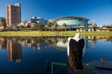 accommodation;accommodations;Adelaide;Adelaide-Convention-Centre;animal;animals;aquatic-bird;aquatic-birds;architecture;Australasian;Australia;Australian;Australian-Pelican;bird;birds;building;buildings;calm;conference-centre;hotel;hotels;Hyatt-Hotel;Hyatt-Regency-Hotel;lake;Lake-Torrens;lakes;marine-bird;marine-birds;Pelecanus-conspicillatus;pelican;pelicans;placid;quiet;reflection;reflections;river;River-Torrens;rivers;S.A.;SA;serene;sleep;sleeping;smooth;South-Australia;State-Capital;still;Torrens-Lake;Torrens-River;tranquil;water;water-bird;water-birds;Wildlife