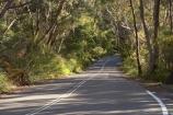 Australasia;Australia;Australian;bend;bends;Blue-Mountains;Blue-Mountains-N.P.;Blue-Mountains-National-Park;Blue-Mountains-NP;Cliff-Dr;Cliff-Dr.;Cliff-Drive;corner;corners;curve;curves;driving;eucalypt;eucalypts;eucalyptus;eucalytis;gum;gum-tree;gum-trees;gums;Katoomba;N.S.W.;New-South-Wales;NSW;road;roads;transport;transportation;travel;traveling;travelling;tree;trees;UN-world-heritage-site;UNESCO-World-Heritage-Site;united-nations-world-heritage-site;world-heritage;world-heritage-area;world-heritage-areas;World-Heritage-Park;World-Heritage-site;World-Heritage-Sites