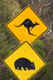 australasia;australia;australian;Blue-Mountains;Blue-Mountains-N.P.;Blue-Mountains-National-Park;Blue-Mountains-NP;kangaroo;Kangaroo-and-Wombat-Warning-Sign;Kangaroo-and-Wombat-Warning-Signs;kangaroo-sign;kangaroo-signs;Kangaroo-Warning-Sign;kangaroos;Lasiorhinus-latrifrons;N.S.W.;natural;nature;New-South-Wales;next-8-km;next-eight-kilometres;NSW;Road;road-sign;road-signs;road_sign;road_signs;roads;roadsign;roadsigns;sign;signs;symbol;symbols;tranportation;transport;travel;UN-world-heritage-site;UNESCO-World-Heritage-Site;united-nations-world-heritage-site;warn;warning;wildlife;wombat;wombat-sign;wombat-signs;wombat-warning-sign;wombat-warning-signs;wombats;world-heritage;world-heritage-area;world-heritage-areas;World-Heritage-Park;World-Heritage-site;World-Heritage-Sites;yellow-black