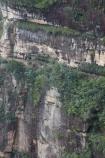 Australia;Blue-Mountains;Blue-Mountains-N.P.;Blue-Mountains-National-Park;Blue-Mountains-NP;bluff;bluffs;cliff;cliffs;escarpment;escarpments;hiking-track;hiking-tracks;mountainside;mountainsides;N.S.W.;National-Pass-Track;National-Pass-Trail;New-South-Wales;NSW;steep;track;tracks;trail;trails;UN-world-heritage-site;UNESCO-World-Heritage-Site;united-nations-world-heritage-site;walking-track;walking-tracks;walking-trail;walking-trails;Wentworth-Falls;world-heritage;world-heritage-area;world-heritage-areas;World-Heritage-Park;World-Heritage-site;World-Heritage-Sites