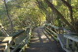 Australia;botanical;Brisbane;brisbane-river;City-Botanic-Gardens;mangrove;Mangrove-Boardwalk;mangroves;Queensland;rivers;walk;walkway;walkways