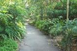 Australia;botanical;Brisbane;City-Botanic-Gardens;footpath;footpaths;forest;forests;path;pathways;Queensland;rain-forest;rain-forests;Rainforest-Pathway;walk;walkway;walkways