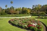 australasia;Australia;australian;botanic-gardens;botanical;Brisbane;City-Botanic-Gardens;flower;flower-bed;flower-beds;Flower-Garden;flower-gardens;flowers;palm;palms;Queensland