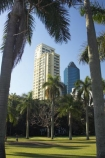 australasia;Australia;australian;botanic-gardens;botanical;Brisbane;building;buildings;City-Botanic-Gardens;office;offices;palm;palms;Queensland