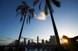 Australasia;Australia;Australian;Brisbane;Brisbane-River;dusk;evening;nightfall;palm;palm-tree;palm-trees;palms;Petrie-Bight;Qld;Queensland;river;rivers;sky;Story-Bridge;twilight