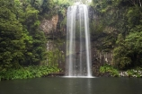 Atherton-Tableland;Atherton-Tablelands;Australasian;Australia;Australian;cascade;cascades;creek;creeks;falls;Millaa-Millaa-Falls;Millaa-Millaa-Waterfall;Millaa-Millaa-Waterfalls;natural;nature;North-Queensland;Qld;Queensland;scene;scenic;stream;streams;tropical-rainforest;tropical-rainforests;water;water-fall;water-falls;waterfall;waterfalls;wet