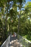 Aerial-Walkway;Australasian;Australia;Australian;beautiful;beauty;boardwalk;boy;boys;bush;Canopy-Walkway;child;children;Daintree-Discovery-Centre;Daintree-Forest;Daintree-N.P.;Daintree-National-Park;Daintree-NP;Daintree-Rainforest;endemic;families;family;forest;forests;girl;girls;green;holiday;holidaying;holidays;native;native-bush;natural;nature;North-Queensland;Qld;Queensland;rain-forest;rain-forests;rain_forest;rain_forests;rainforest;rainforest-canopy;rainforests;scene;scenic;tourism;tourist;tourists;travel;traveler;traveling;traveller;travelling;tree;trees;Tropcial-North-Queensland;tropical;tropical-rainforest;tropical-rainforests;tropical-vegetation;UNESCO-World-Heritage-Site;vacation;vacationers;vacationing;vacations;walkway;Wiorld-Heritage-Site;wood;woods;World-Heritage-Area;World-Heritage-Park;World-Heritage-Site