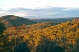 A.C.T.;ACT;Australia;Australian-Capital-Territory;bush;Canberra;Canberra-Nature-Park;capital;capitals;eucalypt;eucalypts;eucalyptus;eucalytis;gum;gum-tree;gum-trees;gums;Mount-Ainslie;Mount-Ainslie-Reserve;Mt-Ainslie;Mt.-Ainslie;native-bush;natural-bush;tree;trees