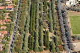 A.C.T.;ACT;aerial;aerial-photo;aerial-photograph;aerial-photographs;aerial-photography;aerial-photos;aerial-view;aerial-views;aerials;Australia;Australian-Capital-Territory;Braddon;Canberra;conifer;conifers;Haig-Park;tree;trees;Turner