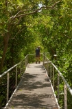 Australasian;Australia;Australian;boardwalk;boardwalks;Darwin;East-Point-Recreation-Reserve;East-Point-Reserve;male;man;mangrove;Mangrove-Boardwalk;mangroves;N.T.;Northern-Territory;NT;people;person;Top-End