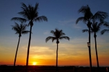 Australasian;Australia;Australian;Darwin;dusk;evening;Mindil-Beach;N.T.;nightfall;Northern-Territory;NT;orange;palm-tree;palm-trees;sky;sunset;sunsets;Top-End;twilight