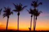Australasian;Australia;Australian;Darwin;dusk;evening;Mindil-Beach;N.T.;nightfall;Northern-Territory;NT;orange;palm-tree;palm-trees;sky;sunset;sunsets;Top-End;twilight