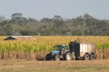 agricultural;agriculture;australasia;Australia;australian;building;buildings;cane;combine-harvester;crop;crops;farm;farming;farmland;farms;field;fields;harvest;harvester;harvesters;harvesting;harvestor;harvestors;hervey-bay;horticulture;industry;meadow;meadows;old-roof;paddock;paddocks;pasture;pastures;pattern;patterns;Queensland;roof;roofs;rooves;rural;rusty;shed;sheds;sugar;sugar-cane;sugar_cane;sugarcane;tractor;tractors;trailer;trailers;tropical;truck;trucks
