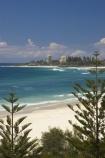 australasia;Australia;beach;beaches;coast;coastal;coolangatta;Gold-Coast;holiday;holidays;queensland;sand;sandy;surfers-paradise;tourism;travel;tree;trees;vacation;vacations