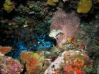 Agincourt-Reef;Agincourt-Reefs;Australasian;Australia;Australian;Barrier-Reef;coral-reef;coral-reefs;Coral-Sea;corals;dive-site;dive-sites;diving;ecosystem;environment;fan-coral;fan-corals;fish;fishes;gorgonian-fan-coral;Great-Barrier-Reef;Great-Barrier-Reef-Marine-Park;Leaf-Scorpionfish;Leaf-Scorpionfishes;marine;marine-environment;marine-life;marinelife;North-Queensland;Ocean;oceanlife;Oceans;Paperfish;Qld;Queensland;reef;reefs;ribbon-reef;ribbon-reefs;ribbonreef;ribbonreefs;Sailfin-leaf-fish;Scorpaenidae;Scorpionfish;scorpionfishes;scuba-diving;Sea;sea-fan;sea-fans;seafan;seafans;sealife;Seas;South-Pacific;Taenianotus-triacanthus;Tasman-Sea;Tropcial-North-Queensland;tropical-reef;tropical-reefs;under-water;under_water;undersea;underwater;underwater-photo;underwater-photography;underwater-photos;UNESCO-World-Heritage-Site;Wiorld-Heritage-Site;World-Heritage-Area;World-Heritage-Park