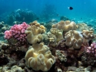 Agincourt-Reef;Agincourt-Reefs;Australasian;Australia;Australian;Barrier-Reef;coral-reef;coral-reefs;Coral-Sea;dive-site;dive-sites;diving;ecosystem;environment;fish;fishes;Great-Barrier-Reef;Great-Barrier-Reef-Marine-Park;marine;marine-environment;marine-life;marinelife;North-Queensland;Ocean;oceanlife;Oceans;Qld;Queensland;reef;reefs;ribbon-reef;ribbon-reefs;ribbonreef;ribbonreefs;scuba-diving;Sea;sealife;Seas;South-Pacific;Tasman-Sea;Tropcial-North-Queensland;tropical-reef;tropical-reefs;under-water;under_water;undersea;underwater;underwater-photo;underwater-photography;underwater-photos;UNESCO-World-Heritage-Site;Wiorld-Heritage-Site;World-Heritage-Area;World-Heritage-Park