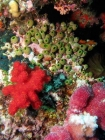Agincourt-Reef;Agincourt-Reefs;Australasian;Australia;Australian;Barrier-Reef;coral-reef;coral-reefs;Coral-Sea;dive-site;dive-sites;diving;ecosystem;environment;Great-Barrier-Reef;Great-Barrier-Reef-Marine-Park;marine;marine-environment;marine-life;marinelife;North-Queensland;Ocean;oceanlife;Oceans;Qld;Queensland;reef;reefs;ribbon-reef;ribbon-reefs;ribbonreef;ribbonreefs;scuba-diving;Sea;sealife;Seas;South-Pacific;Tasman-Sea;Tropcial-North-Queensland;tropical-reef;tropical-reefs;under-water;under_water;undersea;underwater;underwater-photo;underwater-photography;underwater-photos;UNESCO-World-Heritage-Site;Wiorld-Heritage-Site;World-Heritage-Area;World-Heritage-Park