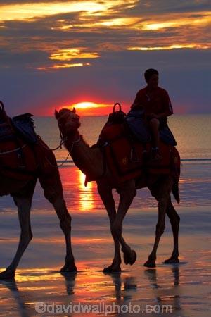 Australasian;Australia;Australian;beach;beaches;Broome;Cable-Beach;calm;camel;camel-train;camel-trains;camels;cloud;clouds;coast;coastal;coastline;dusk;evening;icon;iconic;icons;Kimberley;Kimberley-Region;nightfall;orange;placid;quiet;reflection;reflections;sand;sandy;serene;shore;shoreline;silhouette;silhouettes;sky;smooth;still;sunset;sunsets;The-Kimberley;tourism;tourist;tourist-attraction;tourist-attractions;tourists;tranquil;twilight;W.A.;WA;water;West-Australia;Western-Australia