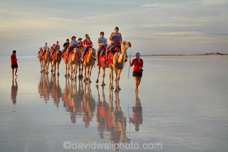 Australasian;Australia;Australian;beach;beaches;Broome;calm;camel;camel-train;camel-trains;camels;coast;coastal;coastline;icon;iconic;icons;Kimberley;Kimberley-Region;last-light;late-light;placid;quiet;reflection;reflections;sand;sandy;serene;shore;shoreline;smooth;still;The-Kimberley;tourism;tourist;tourist-attraction;tourist-attractions;tourists;tranquil;W.A.;WA;water;West-Australia;Western-Australia