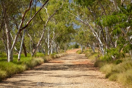 Australasian;Australia;Australian;countryside;Duncan-Road;eucalypt;eucalypts;eucalyptus;eucalytis;gravel-road;gravel-roads;gum;gum-tree;gum-trees;gums;Halls-Creek;Kimberley;Kimberley-Region;metal-road;metal-roads;metalled-road;metalled-roads;old-gold-rush-town;Old-Halls-Creek;road;roads;rural;The-Kimberley;tree;trees;W.A.;WA;West-Australia;Western-Australia