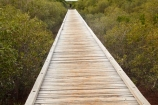 Australasian;Australia;Australian;Broome;dock;docks;jetties;jetty;Kimberley;Kimberley-Region;male;man;mangrove;mangroves;people;person;pier;piers;quay;quays;Streeters-Jetty;The-Kimberley;W.A.;WA;waterside;West-Australia;Western-Australia;wharf;wharfes;wharves