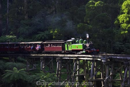australasia;Australia;australian;bridge;bridges;bush;carriage;carriages;children;Dandenong-Ranges;dandenongs;eucalypt;eucalypts;eucalyptus-trees;eucalyptus-treet;excursion;forest;forests;gum-trees;Melbourne;native-bush;native-trees;passenger;passenger-train;passenger-trains;passengers;Puffing-Billy-Steam-Train;rail;railroad;railroads;rails;railway;railways;tourism;tourist;tourist-train;tourist-trains;tourists;track;tracks;train;trains;transport;transportation;tree;trees;trip;viaduct;viaducts;Victoria;wagon;wagons;wooden-bridge;wooden-bridges;wooden-viaduct;wooden-viaducts