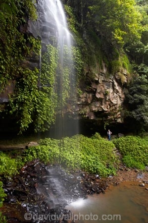 Australasian;Australia;Australian;cascade;cascades;Central-Eastern-Rainforest-Reserves;creek;creeks;Crystal-Falls;Crystal-Shower-falls;Dorrigo-N.P.;Dorrigo-National-Park;Dorrigo-NP;Dorrigo-Rainforest;eco-tourism;eco_tourism;ecotourism;falls;forest;forests;Gondwana-Rainforests-of-Australia;green;lush;Mid-North-Coast;Mid-North-Coast-NSW;Mid-North-Nsw;Mid-Northern-NSW;N.S.W.;natural;nature;New-South-Wales;NSW;overhang;people;person;rainforest;rainforests;scene;scenic;stream;streams;tourist;tourists;verdant;water;water-fall;water-falls;waterfall;Waterfall-Way;waterfalls;wet;Wonga-Walk;World-Heritage-Site