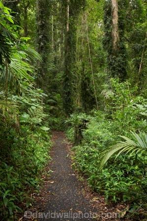 Australasian;Australia;Australian;Central-Eastern-Rainforest-Reserves;Dorrigo-N.P.;Dorrigo-National-Park;Dorrigo-NP;Dorrigo-Rainforest;forest;forests;Gondwana-Rainforests-of-Australia;green;lush;Mid-North-Coast;Mid-North-Coast-NSW;Mid-North-Nsw;Mid-Northern-NSW;N.S.W.;New-South-Wales;NSW;rainforest;rainforests;track;tracks;verdant;walking-track;walking-tracks;Waterfall-Way;Wonga-Track;Wonga-Walk;Wonga-Walk-Track;Wonga-Walking-Track;World-Heritage-Site