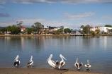 Australasian;Australia;Australian;Australian-Pelican;Australian-Pelicans;bill;bird;Macksville;Mid-North-Coast;Mid-North-Coast-NSW;Mid-North-Nsw;Mid-Northern-NSW;N.S.W.;Nambucca-River;New-South-Wales;NSW;Pelecanus-conspicillatus;Pelican;Pelicans;river;rivers
