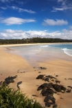 Australasian;Australia;Australian;bay;bays;Beach;beaches;coast;coastal;coastline;Mid-North-Coast;Mid-North-Coast-NSW;Mid-North-Nsw;Mid-Northern-NSW;N.S.W.;New-South-Wales;NSW;ocean;oceans;sand;sandy;Scotts-Head;Scotts-Head;sea;seas;shore;shoreline;surf;wave;waves