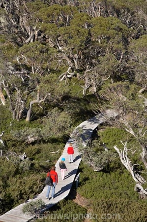 alpine;Australia;boy;boys;Charlotte-Pass;child;children;eucalypt;eucalypts;eucalyptus;eucalytis;families;family;girl;girls;gum;gum-tree;gum-trees;gums;Kangaroo-Ridge;Kosciuszko-N.P.;Kosciuszko-National-Park;Kosciuszko-NP;mountains;N.S.W.;New-South-Wales;NSW;people;person;snow-gum;snow-gums;Snow-Gums-Board-Walk;Snowy-Mountains;South-New-South-Wales;Southern-New-South-Wales;tourism;tourist;tourists;tree;trees;walker;walkers