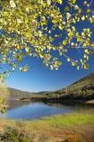 australasia;Australasian;Australia;australian;autuminal;autumn;autumn-colour;autumn-colours;autumnal;color;colors;colour;colours;dam;dams;deciduous;fall;Jounama-Dam;Jounama-Pondage;Jounama-Reservoir;lake;lakes;leaf;leaves;N.S.W.;New-South-Wales;NSW;reservoir;reservoirs;season;seasonal;seasons;Snowy-Mountains;Snowy-Mountains-Drive;Snowy-Mountains-Highway;Snowy-Mountains-Hydro_Electric-Scheme;Snowy-Mountains-Scheme;South-New-South-Wales;Southern-New-South-Wales;Talbingo;tree;trees;water
