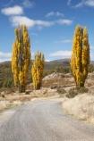 australasia;Australasian;Australia;australian;autuminal;autumn;autumn-colour;autumn-colours;autumnal;color;colors;colour;colours;countryside;deciduous;fall;gravel-road;gravel-roads;Kosciuszko-N.P.;Kosciuszko-National-Park;Kosciuszko-NP;leaf;leaves;metal-road;metal-roads;metalled-road;metalled-roads;N.S.W.;New-South-Wales;NSW;poplar;poplar-tree;poplar-trees;poplars;road;roads;rural;season;seasonal;seasons;Snowy-Mountains;Snowy-Mountains-Drive;Snowy-Mountains-Highway;South-New-South-Wales;Southern-New-South-Wales;tree;trees;Yarrangobilly-Village