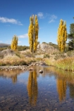 australasia;Australasian;Australia;australian;autuminal;autumn;autumn-colour;autumn-colours;autumnal;brook;brooks;calm;color;colors;colour;colours;creek;creeks;deciduous;fall;flow;Kosciuszko-N.P.;Kosciuszko-National-Park;Kosciuszko-NP;leaf;leaves;N.S.W.;New-South-Wales;NSW;placid;poplar;poplar-tree;poplar-trees;poplars;quiet;reflection;reflections;river;rivers;season;seasonal;seasons;serene;smooth;Snowy-Mountains;Snowy-Mountains-Drive;Snowy-Mountains-Highway;South-New-South-Wales;Southern-New-South-Wales;still;stream;streams;tranquil;tree;trees;water;wet;Yarrangobilly-River;Yarrangobilly-Village
