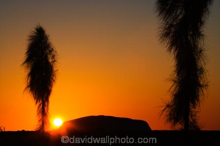 Allocasuarina-decaisneana;Anugu;arid;Australasia;Australia;Australian;Australian-Desert;Australian-Deserts;Australian-icon;Australian-icons;Australian-landmark;Australian-landmarks;Ayers-Rock;Ayers-Rock-Uluru;back-country;backcountry;break-of-day;dawn;dawning;daybreak;Desert;Desert-Oak;Desert-Oaks;Deserts;first-light;icon;iconic;icons;Kurkara;landmark;landmarks;Monolith;Monoliths;morning;N.T.;National-Park;National-Parks;Northern-Territory;NT;orange;Outback;red-centre;rock;rock-formation;rock-formations;rocks;Sacred-Aboriginal-Site;sunrise;sunrises;sunup;The-Outback;The-Rock;twilight;Uluru;Uluru-_-Kata-Tjuta-National-Park;Uluru-_-Kata-Tjuta-World-Heritage-Area;Uluru-Ayers-Rock;Uluru_Kata-Tjuta;UNESCO;Unesco-world-heritage-area;World-Heritage-Area;World-Heritage-Areas