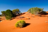 Anugu;arid;Australasia;Australia;Australian;Australian-Desert;Australian-Deserts;back-country;backcountry;Desert;Deserts;dune;dunes;flower;flowers;N.T.;National-Park;National-Parks;Northern-Territory;NT;Outback;red-centre;sand;sand-dune;sand-dunes;sand-hill;sand-hills;sand_dune;sand_dunes;sand_hill;sand_hills;sanddune;sanddunes;sandhill;sandhills;sandy;The-Outback;Uluru-_-Kata-Tjuta-National-Park;Uluru-_-Kata-Tjuta-World-Heritage-Area;UNESCO;Unesco-world-heritage-area;wildflower;wildflowers;World-Heritage-Area;World-Heritage-Areas