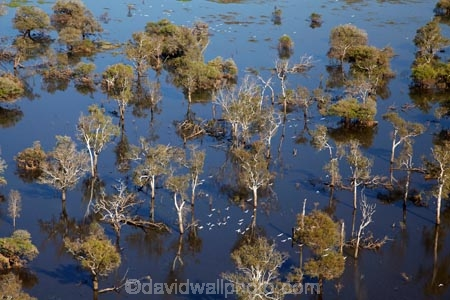 aerial;aerial-photo;aerial-photograph;aerial-photographs;aerial-photography;aerial-photos;aerial-view;aerial-views;aerials;Arnhem-Land;Australia;Australian;billabong;billabongs;East-Alligator-River;flood-plain;flood-plains;floodplain;floodplains;Gagadju;Kakadu;Kakadu-billabong;Kakadu-billabongs;Kakadu-flood-plain;Kakadu-flood-plains;Kakadu-floodplain;Kakadu-floodplains;Kakadu-N.P.;Kakadu-National-Park;Kakadu-NP;Kakadu-wetland;Kakadu-wetlands;Mikinj-Valley;N.T.;Northern-Territory;NT;rainy-season;seasonal;Tin-Camp-Creek;Top-End;UN-world-heritage-area;UN-world-heritage-site;UNESCO-World-Heritage-area;UNESCO-World-Heritage-Site;united-nations-world-heritage-area;united-nations-world-heritage-site;wet-season;wetland;wetlands;wilderness;wilderness-area;wilderness-areas;world-heritage;world-heritage-area;world-heritage-areas;World-Heritage-Park;World-Heritage-site;World-Heritage-Sites