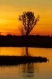 Australia;Australian;billabong;billabongs;dusk;evening;flood-plain;flood-plains;floodplain;floodplains;Gagadju;Gagudju-Dreaming;Kakadu;Kakadu-billabong;Kakadu-billabongs;Kakadu-flood-plain;Kakadu-flood-plains;Kakadu-floodplain;Kakadu-floodplains;Kakadu-N.P.;Kakadu-National-Park;Kakadu-NP;Kakadu-wetland;Kakadu-wetlands;N.T.;national-parks;nightfall;Northern-Territory;NT;orange;sky;sunset;sunsets;Top-End;twilight;UN-world-heritage-area;UN-world-heritage-site;UNESCO-World-Heritage-area;UNESCO-World-Heritage-Site;united-nations-world-heritage-area;united-nations-world-heritage-site;wetland;wetlands;wilderness;wilderness-area;wilderness-areas;world-heritage;world-heritage-area;world-heritage-areas;World-Heritage-Park;World-Heritage-site;World-Heritage-Sites;Yellow-Water;Yellow-Water-Billabong;Yellow-Water-Wetland;Yellow-Water-Wetlands