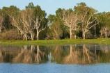 Australia;Australian;billabong;billabongs;calm;flood-plain;flood-plains;floodplain;floodplains;Gagadju;Gagudju-Dreaming;Kakadu;Kakadu-billabong;Kakadu-billabongs;Kakadu-flood-plain;Kakadu-flood-plains;Kakadu-floodplain;Kakadu-floodplains;Kakadu-N.P.;Kakadu-National-Park;Kakadu-NP;Kakadu-wetland;Kakadu-wetlands;N.T.;national-parks;Northern-Territory;NT;placid;quiet;reflection;reflections;serene;smooth;still;Top-End;tranquil;tree;trees;UN-world-heritage-area;UN-world-heritage-site;UNESCO-World-Heritage-area;UNESCO-World-Heritage-Site;united-nations-world-heritage-area;united-nations-world-heritage-site;water;wetland;wetlands;wilderness;wilderness-area;wilderness-areas;world-heritage;world-heritage-area;world-heritage-areas;World-Heritage-Park;World-Heritage-site;World-Heritage-Sites;Yellow-Water;Yellow-Water-Billabong;Yellow-Water-Wetland;Yellow-Water-Wetlands