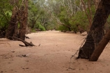 Australia;Australian;dry-riverbed;dry-riverbeds;Gagadju;Kakadu;Kakadu-N.P.;Kakadu-National-Park;Kakadu-NP;N.T.;Northern-Territory;NT;river;rivers;sand;sandy;South-Alligator-River;Top-End;UN-world-heritage-area;UN-world-heritage-site;UNESCO-World-Heritage-area;UNESCO-World-Heritage-Site;united-nations-world-heritage-area;united-nations-world-heritage-site;world-heritage;world-heritage-area;world-heritage-areas;World-Heritage-Park;World-Heritage-site;World-Heritage-Sites