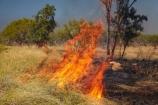 alight;Australasia;Australia;burn;burned;burning;burnoff;burnoffs;burns;burnt;bush-fire;bush-fires;danger;dangerous;destruction;fire;fires;flamable;flame;flames;flaming;grass-fire;grass-fires;heat;hot;N.T.;Northern-Territory;NT;on-fire;orange;Timber-Creek;Top-End;Victoria-Highway;wild-fire;wild-fires;wildfire;wildfires