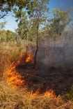 alight;Australasia;Australia;burn;burned;burning;burnoff;burnoffs;burns;burnt;bush-fire;bush-fires;danger;dangerous;destruction;fire;fires;flamable;flame;flames;flaming;grass-fire;grass-fires;Gregory-N.P;Gregory-National-Park;Gregory-NP;heat;hot;Jutpurra-N.P;Jutpurra-National-Park;Jutpurra-NP;N.T.;national-parks;Northern-Territory;NT;on-fire;orange;Top-End;Victoria-Highway;Victoria-River;wild-fire;wild-fires;wildfire;wildfires