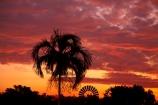 Australasia;Australia;dusk;Emerald-Springs-Road-House;Emerald-Springs-Roadhouse;evening;N.T.;nightfall;Northern-Territory;NT;orange;palm;palm-tree;palm-trees;palms;sky;sunset;sunsets;Top-End;twilight;wind_mill;wind_mills;windmill;windmills